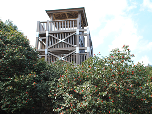 From the observation platform, you can view the Camellia trees in colonies and the islands in the ocean.